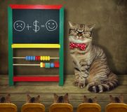 Cat in glasses teaches funny math. The cat in glasses and a bow tie teaches funny mathematics to its students royalty free stock image