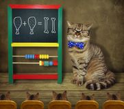 Cat in glasses teaches math 2. The cat in glasses and a bow tie teaches mathematics to its students stock photos