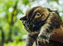 Cat with glasses Stock Photo