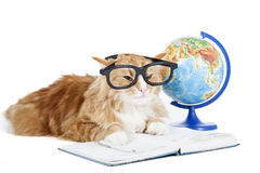 Cat in glasses with a globe Royalty Free Stock Photo