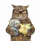 Cat with a piggy bank for dollars. The cat in glasses is holding piggy bank and dollars. White background stock image