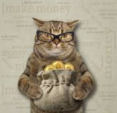Cat with a sack of bitcoins 3. The cat in glasses is holding a sack with bitcoins royalty free stock photo