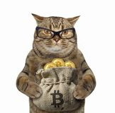 Cat with a sack of bitcoins. The cat in glasses is holding a sack with bitcoins. White background stock images
