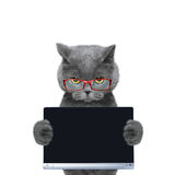 Cat in glasses holds a tablet or laptop. Cat holds a tablet or laptop -- isolate on white background royalty free stock images