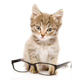 Cat with glasses. looking at camera. isolated on w Stock Photos