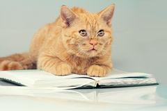 Cat with glasses lying on a book Royalty Free Stock Photo