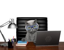 Cat in glasses manager is doing some work on the computer. Isolated on white. Background Royalty Free Stock Images