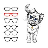 Cat with glasses. Painted stylized image of a cat on a white background, who wears glasses. Choosing glasses for eyes. The selecti royalty free illustration