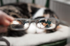Cat through glasses Stock Photos