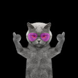 Cat with glasses showing thumb up and welcomes -- Isolate on bla. Ck background stock photography
