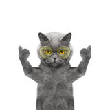 Cat in glasses showing thumb up and welcomes. Isolate on white background Stock Photography