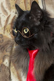 Cat with glasses and tie Royalty Free Stock Image