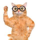 Cat in the glasses. Royalty Free Stock Photography