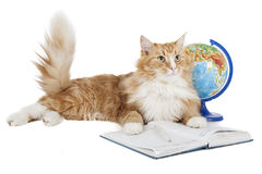 Cat with a globe Stock Photo