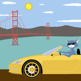 Cat go to San Francisco Stock Images