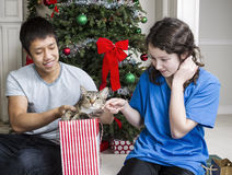 Cat goes into Gift Bag Royalty Free Stock Photo