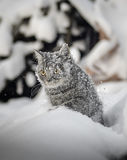 Cat goes on snowdrifts winter Royalty Free Stock Photos