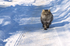 Cat in the winter Stock Photos