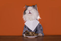 Cat is going for dinner chicken Royalty Free Stock Images
