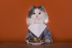 Cat is going for dinner chicken Stock Image