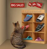 The cat in a store stock images