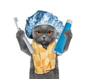 Cat is going to clean the teeth after shower Stock Images