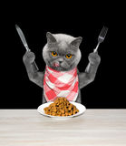 Cat is going to eat dried pet food Stock Images