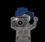 Cat  is going to take pictures during the trip Stock Photography