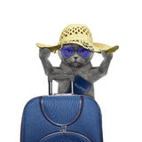 Cat is going on a trip to travel with a suitcase. Isolated on white Stock Photo