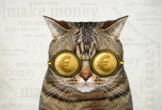 Cat in gold euro glasses 2 stock image