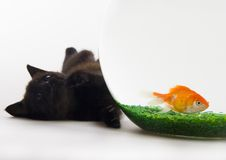 Cat & Gold fish. Cat - the small furry animal with four legs and a tail; people often keep cats as pets Stock Image