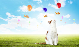 Cat and gold fish. Cute cat hunting goldfish flying on balloon in sky Stock Images