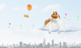 Cat and gold fish. Cute cat hunting goldfish flying on balloon in sky Royalty Free Stock Photos