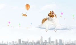 Cat and gold fish    . Mixed media. Cute cat hunting goldfish flying on balloon in sky Royalty Free Stock Images