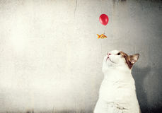 Cat and gold fish . Mixed media. Cute cat hunting goldfish flying on balloon in sky Stock Photo