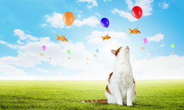 Cat and gold fish . Mixed media. Cute cat hunting goldfish flying on balloon in sky Royalty Free Stock Photo