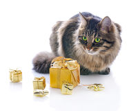 Cat with gold gift boxes Royalty Free Stock Photos