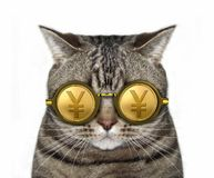 Cat in gold yen glasses stock photography