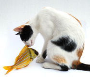 Cat and goldfish Stock Photo