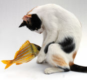 Cat and goldfish Royalty Free Stock Photography
