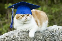 Cat with Graduation Hat. Cat posing on rock with graduation hat with tassel, funny  copy space Stock Photography
