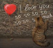 Cat and graffiti 2 royalty free stock image
