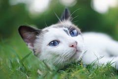 Cat On Grass Stock Photos