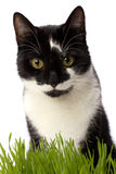 Cat in grass Stock Images