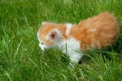 Cat on a grass Royalty Free Stock Photos