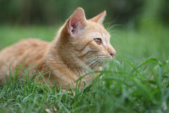Cat on grass. Cat on green grass background Royalty Free Stock Image
