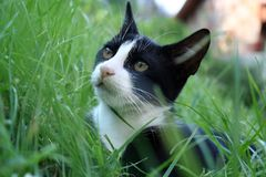 Cat on the grass. Stock Images