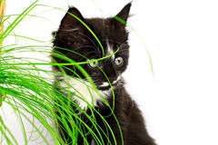Cat and grass Stock Photography
