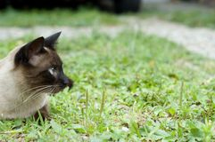 Cat in grass. Profile of a cat in green grass Royalty Free Stock Photos