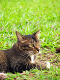 Cat on Grass. With copyspace Stock Photo